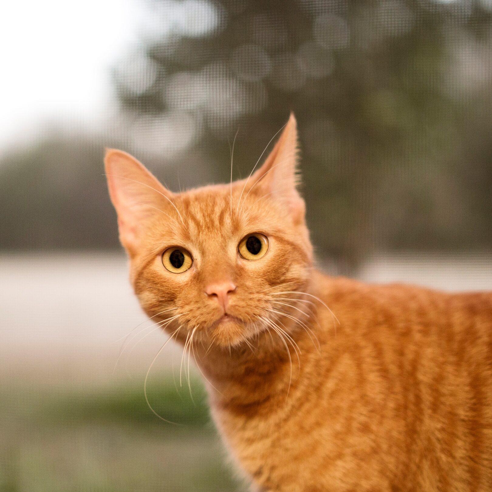 rsz_butter-cat